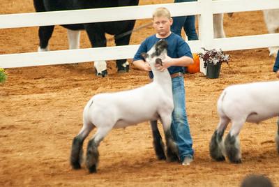americanroyal2020_sheep_showmanship011
