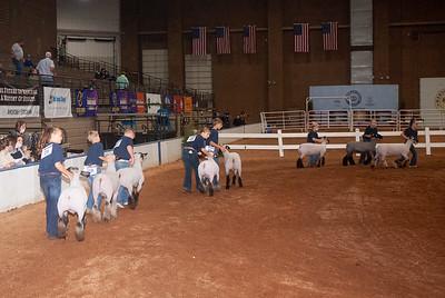 americanroyal2020_sheep_showmanship002