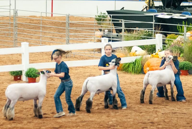 americanroyal2020_sheep_showmanship007
