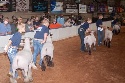 americanroyal2020_sheep_showmanship001