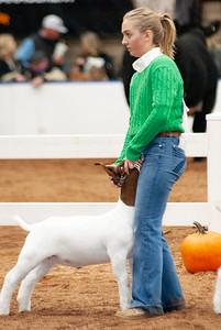americanroyal2020_goats_market007