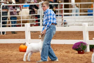 americanroyal2020_goats_market006
