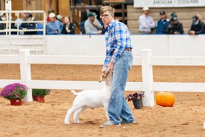 americanroyal2020_goats_market011