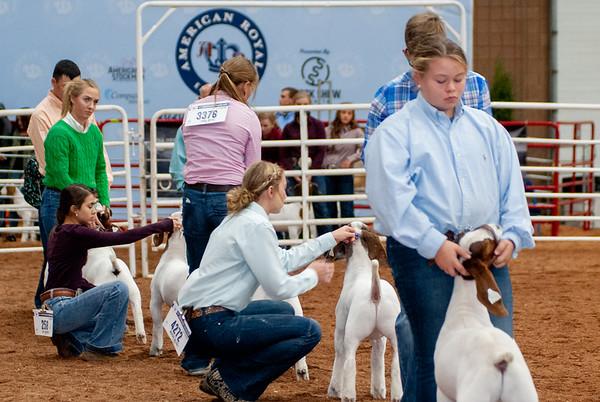 americanroyal2020_goats_market001
