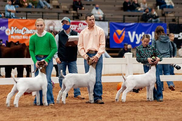 americanroyal2020_goats_market004