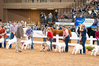americanroyal2020_goats_market014