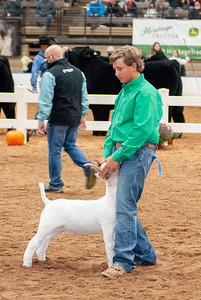 americanroyal2020_goats_market021