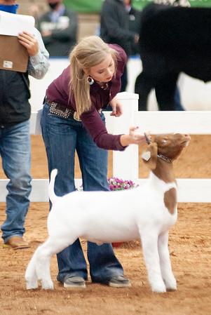 americanroyal2020_goats_market018