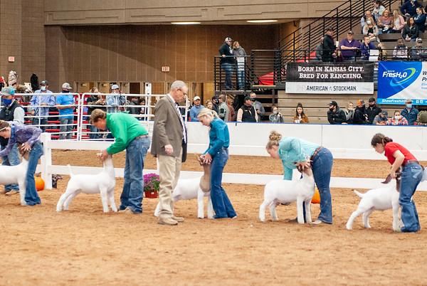 americanroyal2020_goats_market017