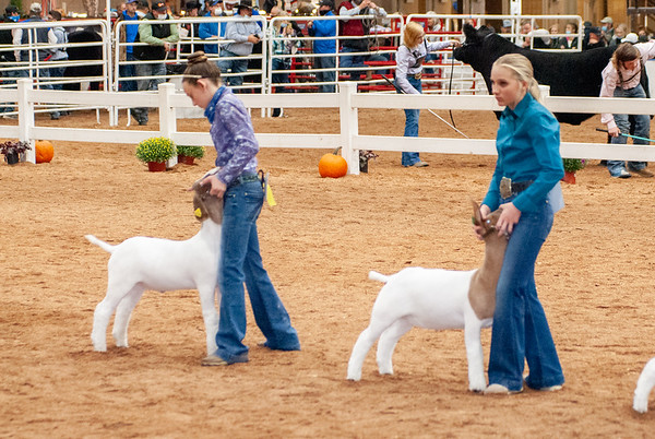 americanroyal2020_goats_market022