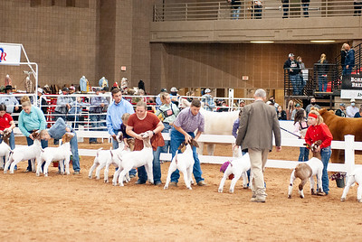 americanroyal2020_goats_market013