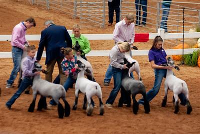 americanroyal2020_lambs_market021