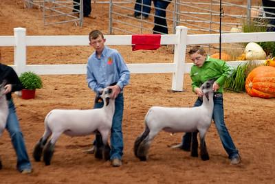 americanroyal2020_lambs_market020
