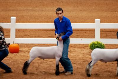 americanroyal2020_lambs_market019