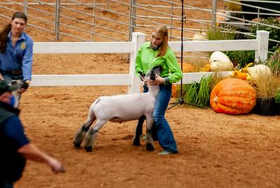americanroyal2020_lambs_market001