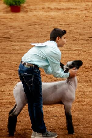 americanroyal2020_lambs_market004