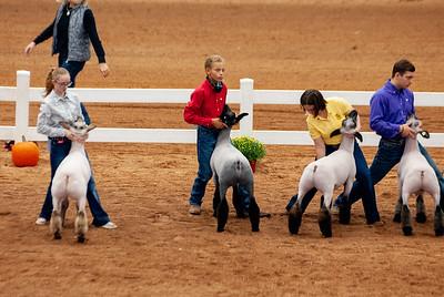 americanroyal2020_lambs_market022