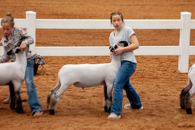 americanroyal2020_lambs_market016