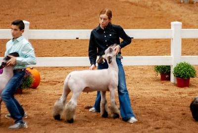americanroyal2020_lambs_market002