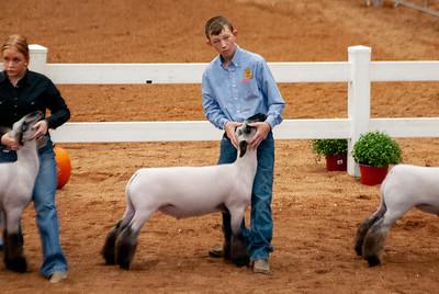 americanroyal2020_lambs_market013