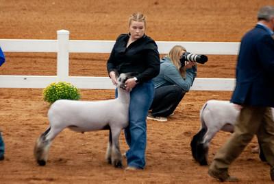 americanroyal2020_lambs_market018
