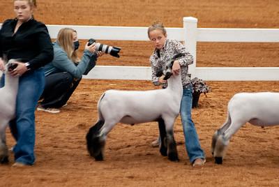 americanroyal2020_lambs_market017