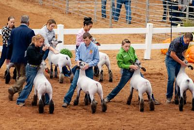 americanroyal2020_lambs_market007
