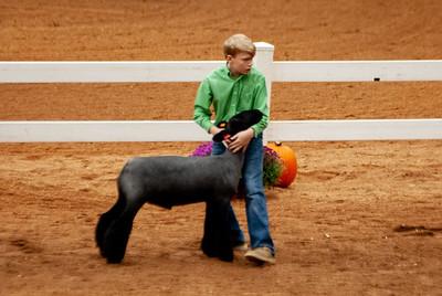 americanroyal2020_lambs_market003