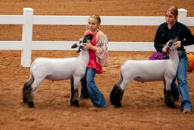 americanroyal2020_lambs_market015