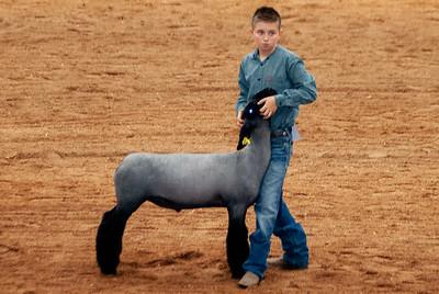 americanroyal2020_lambs_market005
