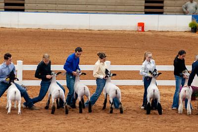 americanroyal2020_lambs_market009