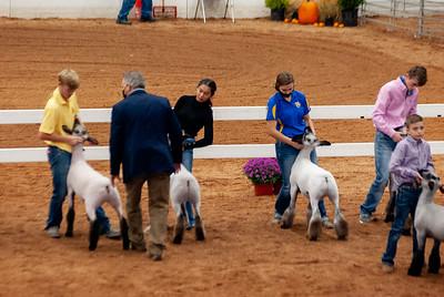 americanroyal2020_lambs_market024
