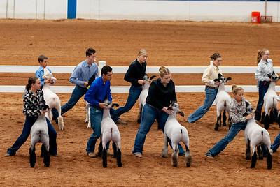 americanroyal2020_lambs_market011
