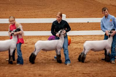 americanroyal2020_lambs_market014