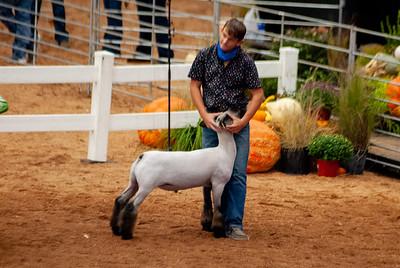 americanroyal2020_lambs_market012