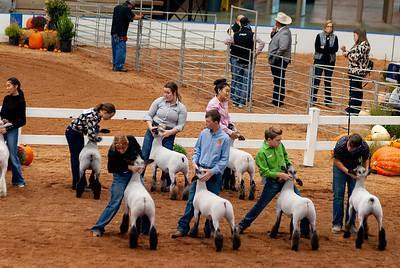 americanroyal2020_lambs_market010