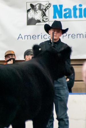 americanroyal2020_steers_market017