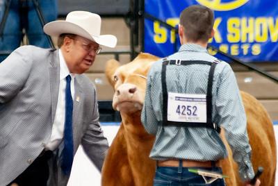 americanroyal2020_steers_market015