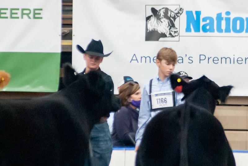americanroyal2020_steers_market021