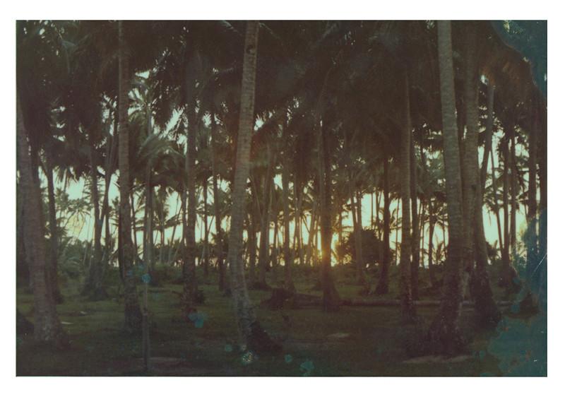 Sunrise through the coconut trees.