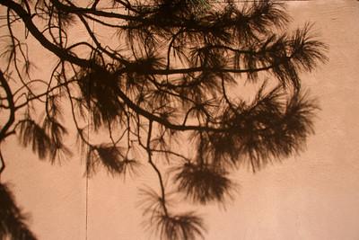 Pine Shadow
