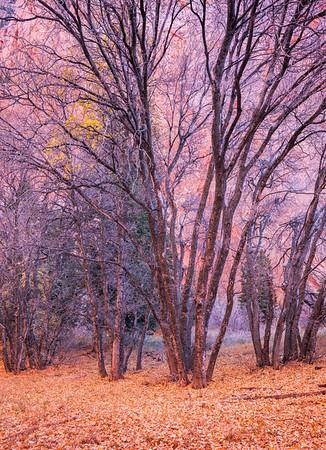 Taylor Creek Trail, Utah