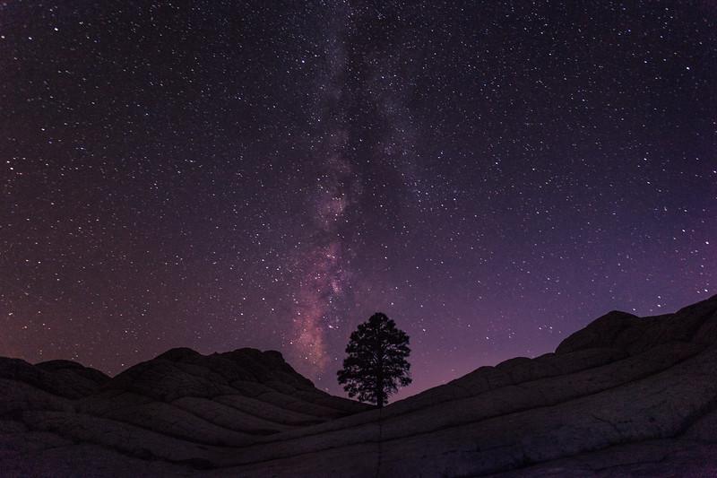 Tree & Milky Way, Arizona