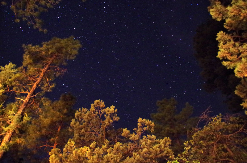 A very starry night deep in the ponderosas of Pine, Arizona.