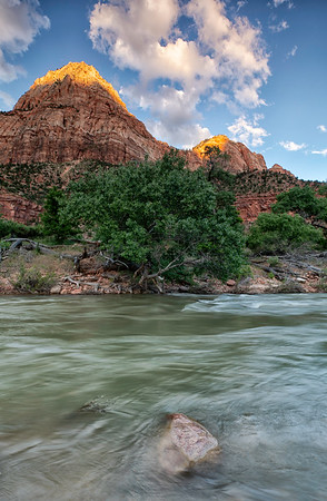 Water Trees and Rock of Zion_9853