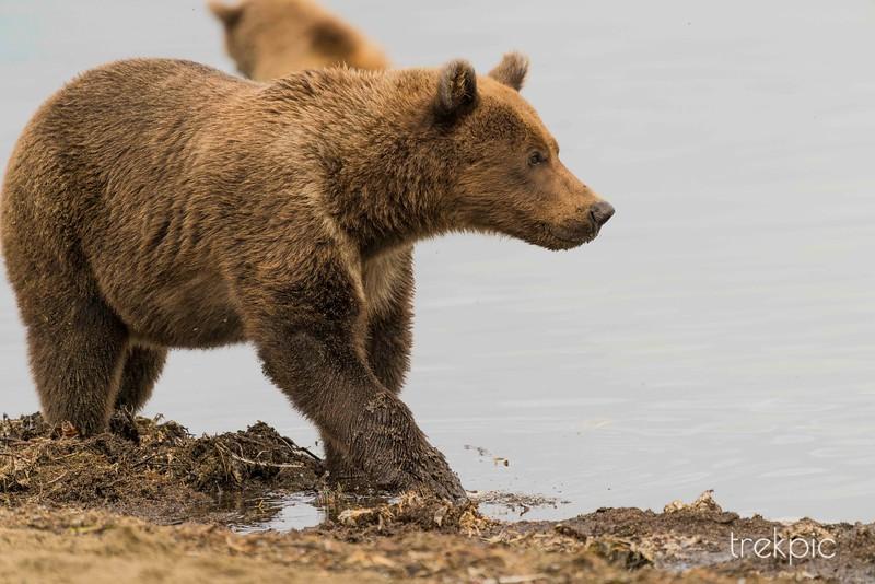 Cubs 3