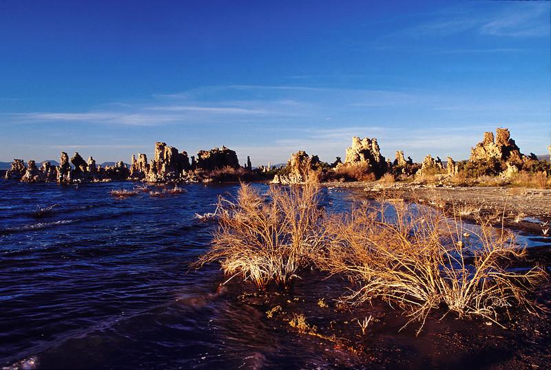 Mono Lake bushes & tufas