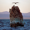 osprey building nest on tufa