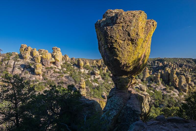 tulip rock Chiricahua