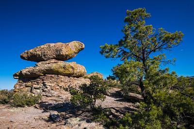 dove on a rock Chiricahua